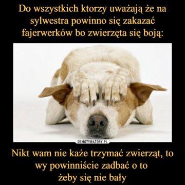 Bardzo prosimy o nie używanie petard w czasie nocy sylwestrowej, to dramat dla zwierząt!!!!